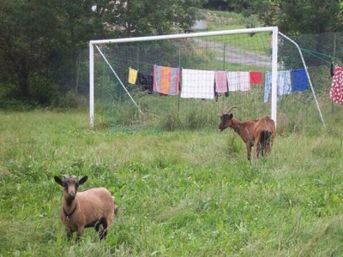 The Brazil defense had a good day!
