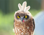 a funny Owl!