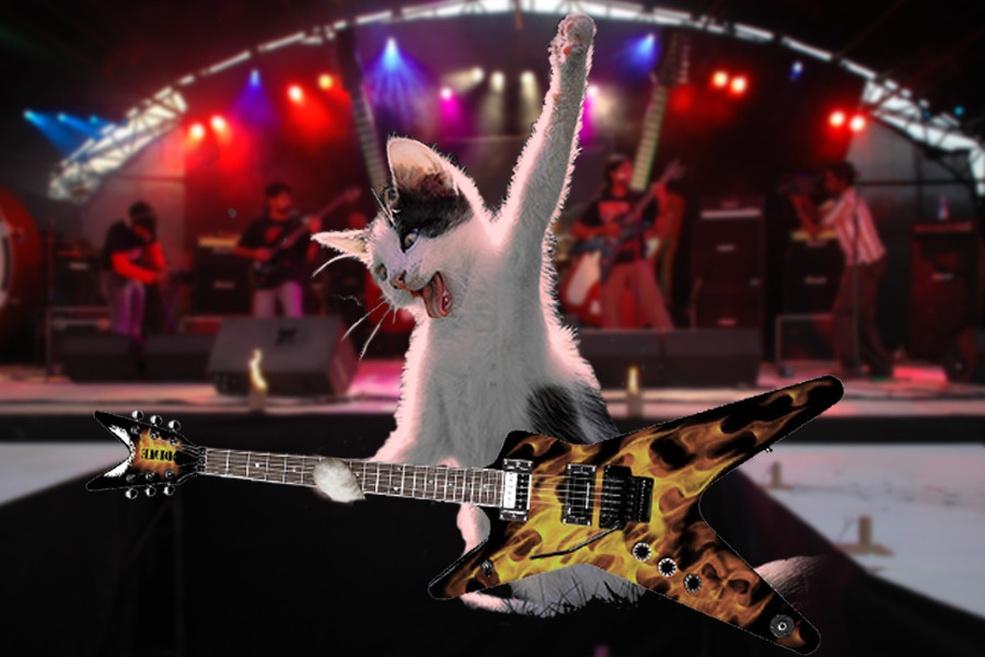 ..the cat of rock!