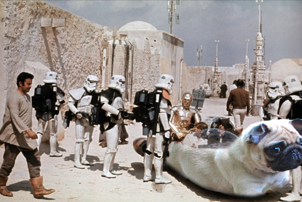 ..the pugs you are looking for!
